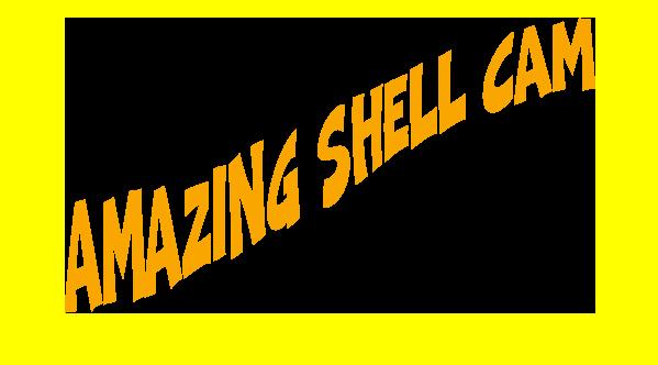 shellcam.png