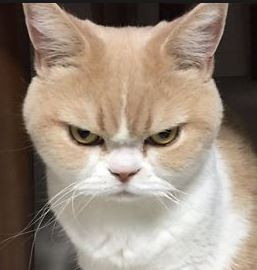 This pussy is pissed.