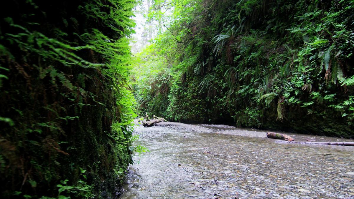 creek-in-fern-canyon_Z182plMXS.mp4