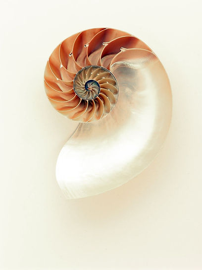 nautilus-shell-shimmer-silver.jpg
