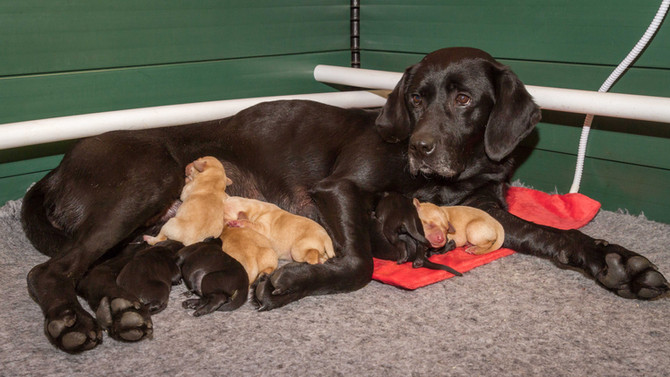 DUSTY & MAX'S PUPPIES ARRIVE