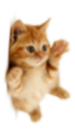 —Pngtree—cat_1193701.png