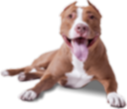 dog_PNG50327.png