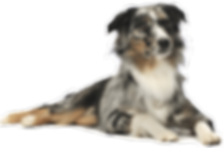 15036878454-dog-png-image-picture-downlo