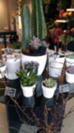 Ottawa Cactus The Stalk Market