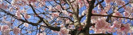 Le printemps, la saison du Foie en Médecine Chinoise
