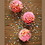 Thumbnail: Funfetti Cupcake Baking Kit Box - Make your own 12 cupcakes w/cake mix. Send a g
