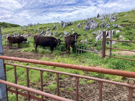 牛を見にお出かけ