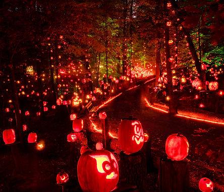 pumpkin trail.jpg