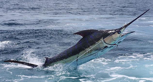 Blue Marlin Marathon.jpg