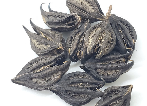 Crown Thorn Pods