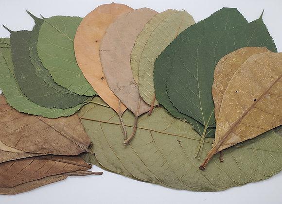 Leaf Variety Pack