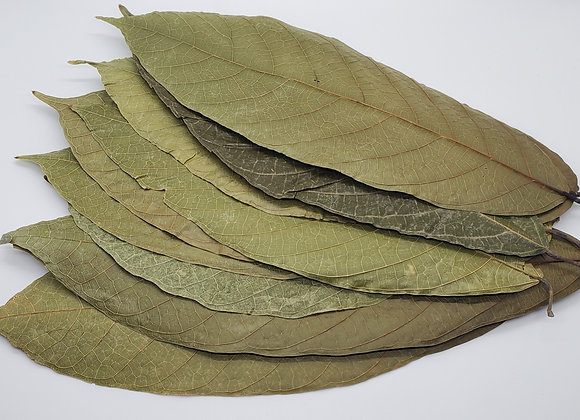 Cacao Leaves