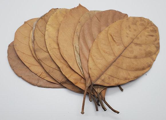 Jackfruit Leaves