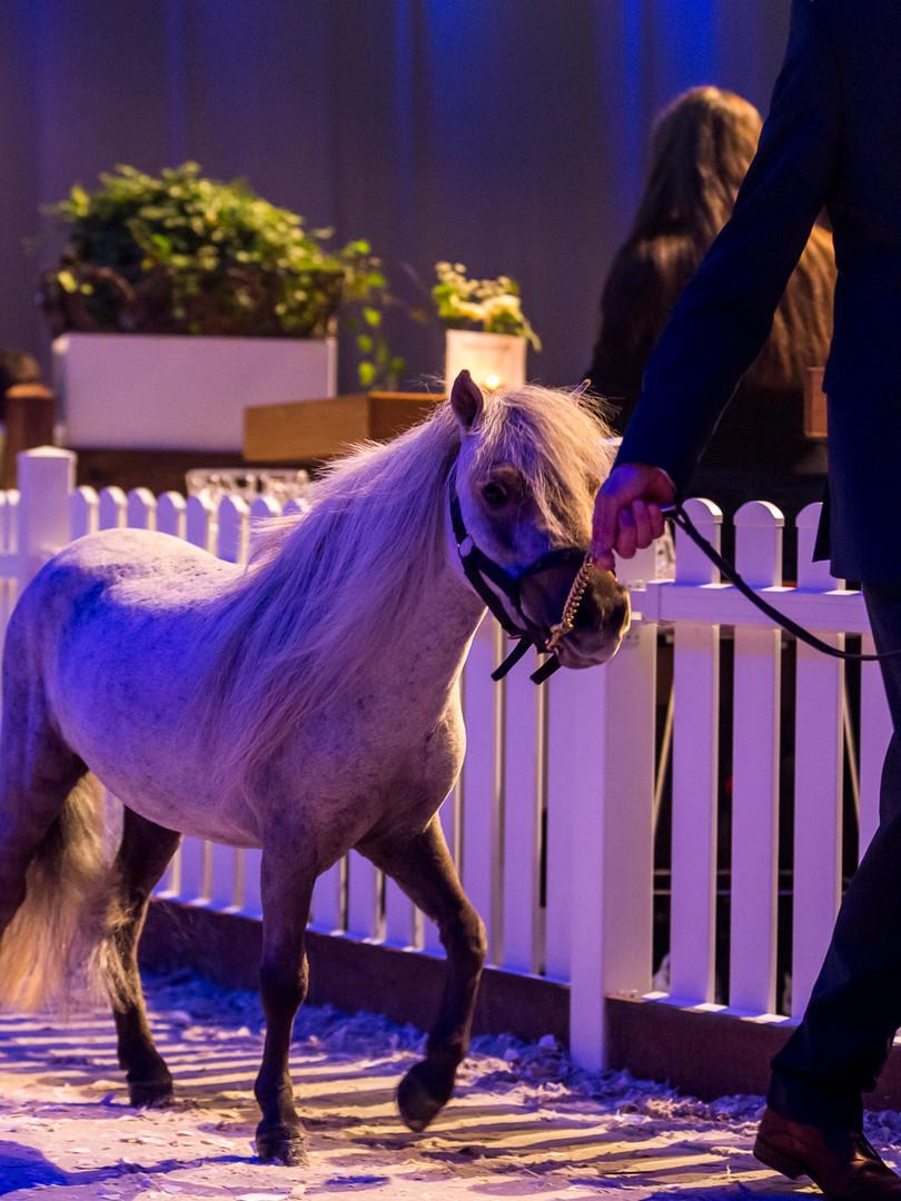 The Hunt 2017 Pony