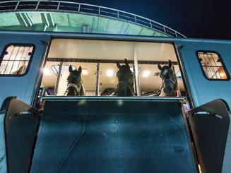 The HUNT Hunter Horses Await the Big Event