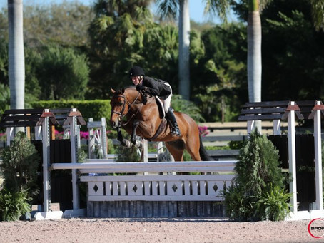 Sorensen Stables' THE HUNT Equine Graduates Prove Successful In The Show Ring