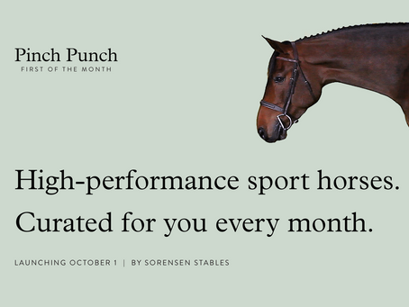 Sorensen Stables Unveils Pinch Punch: First of the Month Curated Equine Sales