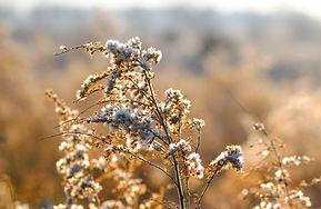 White WIld Flowers
