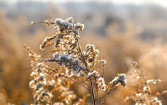Brancas flores silvestres