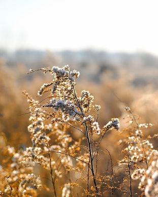 Vit Wild Flowers