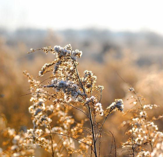 Weiß Wilde Blumen