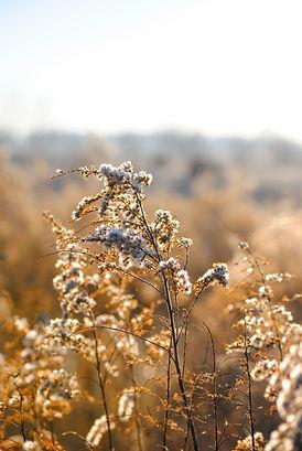 Fleurs blanches WIld