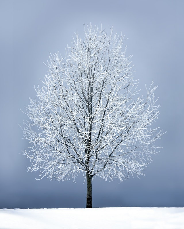 A Frozen Tree In Wintery Snow