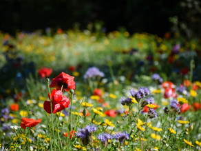 Erddig Head Gardener creates a magical mix for wildlife to thrive in Erddig's car park