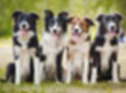 dogscrop.jpg