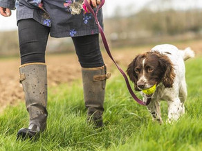 Erddig Introduces Dog Off-Lead Zones!