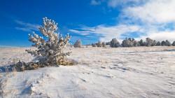 Reborn: Snow Fence Field