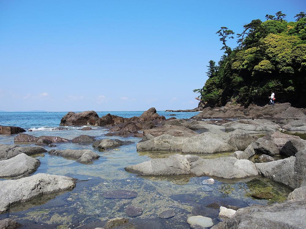 真鶴琴ヶ浜海岸タイドプール