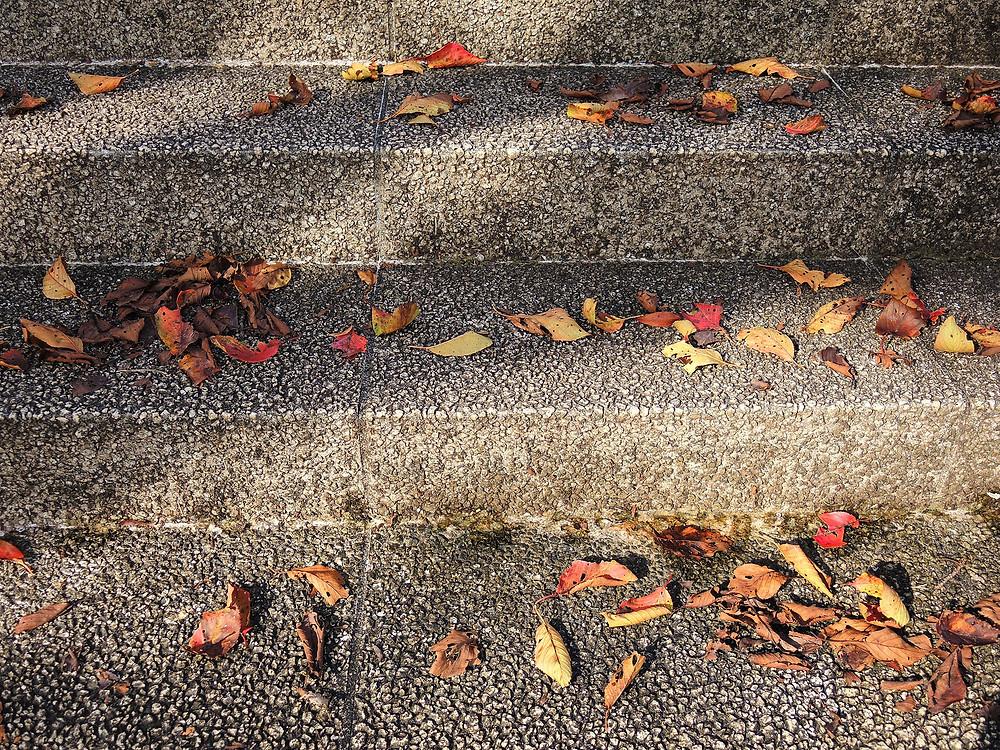 色とりどりの落葉