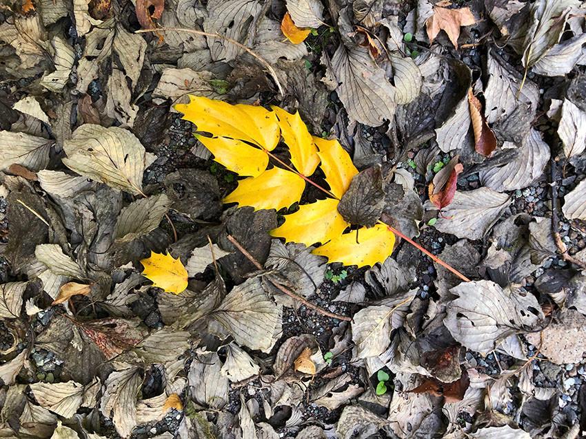 別荘地の秋の色づき