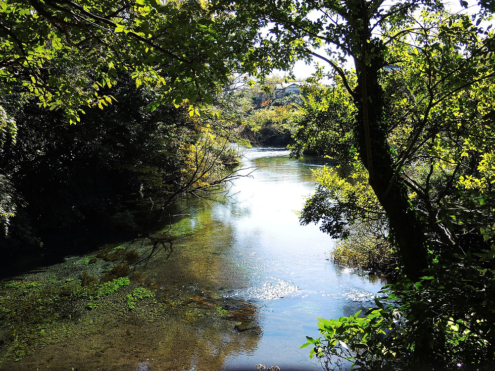 柿田川湧水公園内の柿田川