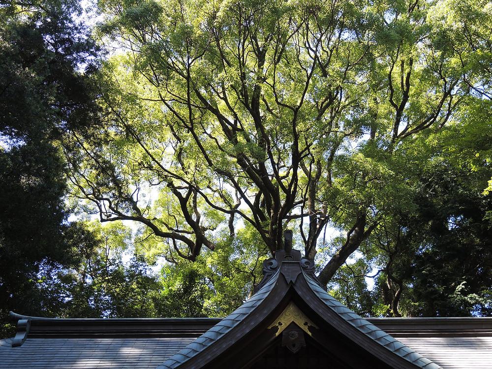湯河原町 五所神社の森