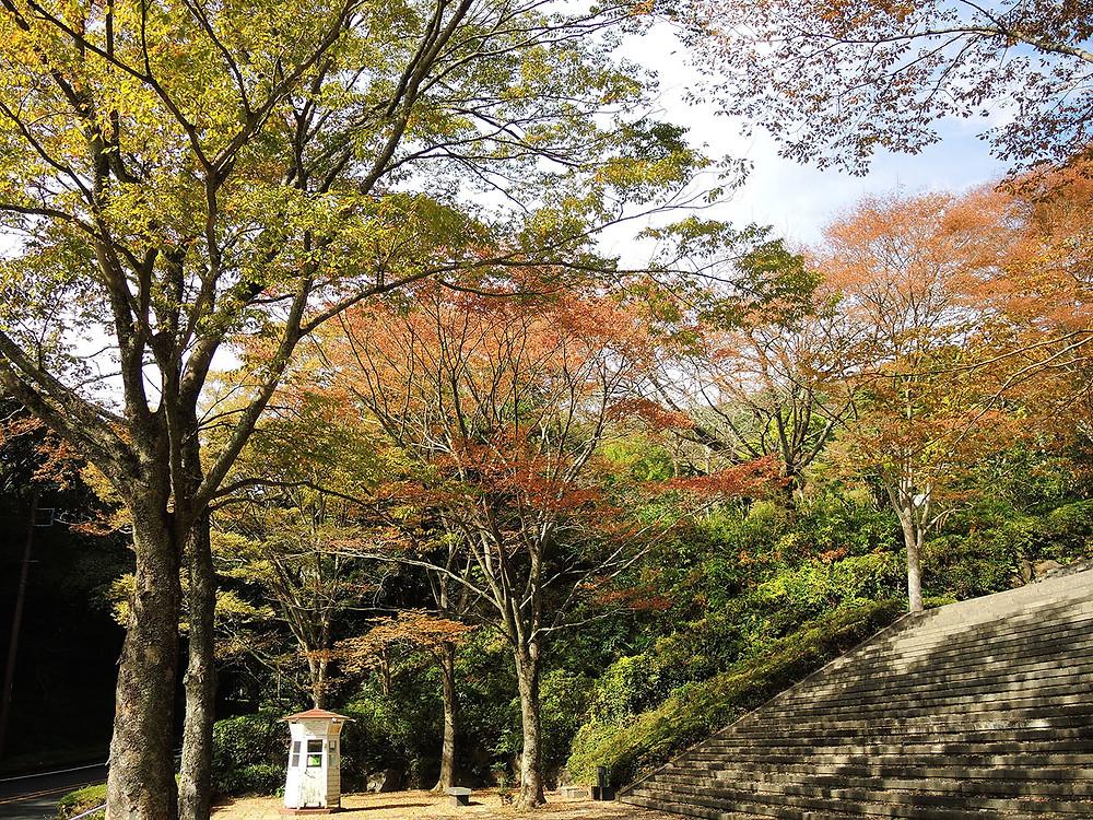 熱海姫の沢公園の黄葉