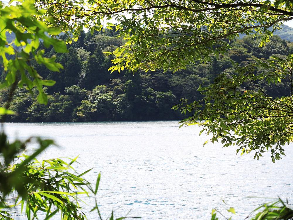 芦ノ湖の森