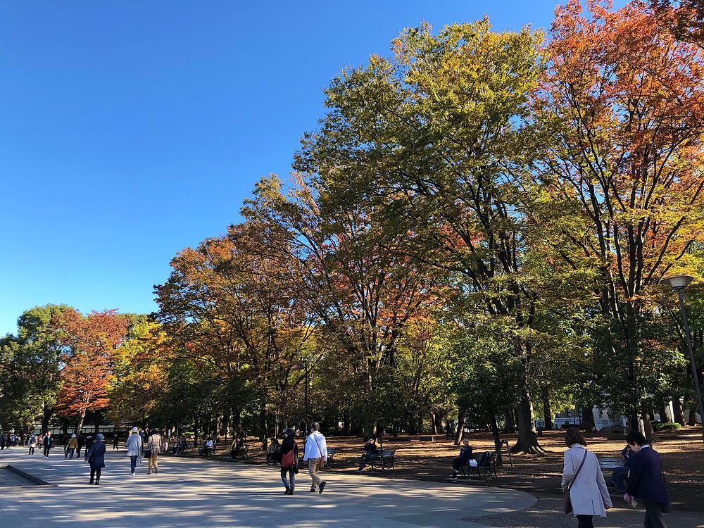 上野公園の紅葉を見に