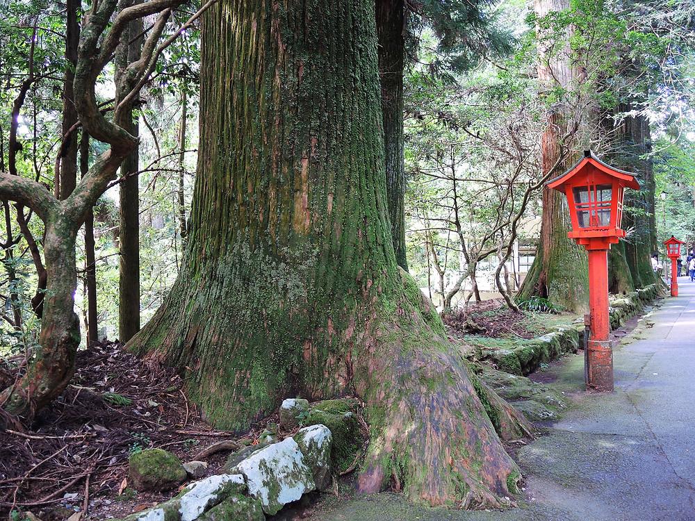 箱根神社杉並木