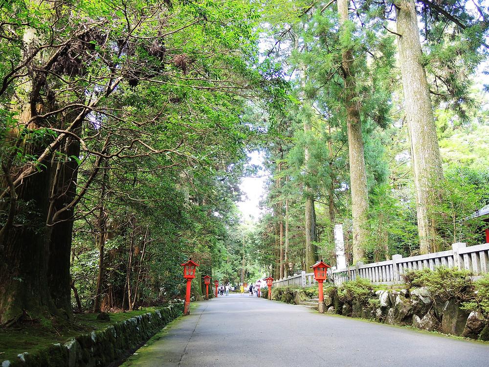箱根神社参道の杉並木