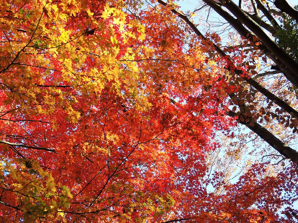 熱海姫の沢公園林間駐車場の紅葉