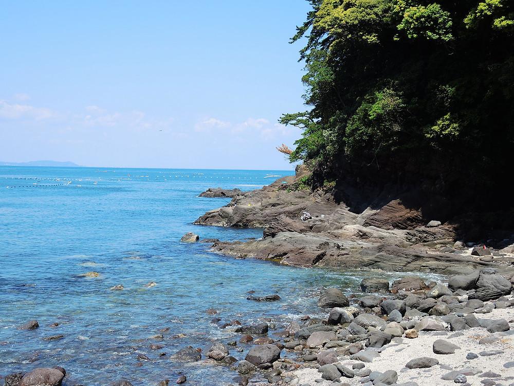 真鶴琴ヶ浜海岸シュノーケリング