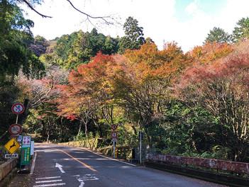 奥湯河原の紅葉がある風景