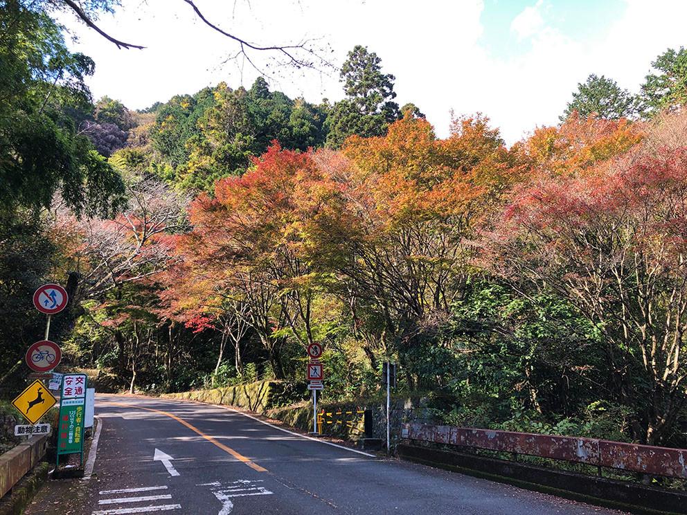 奥湯河原紅葉の風景