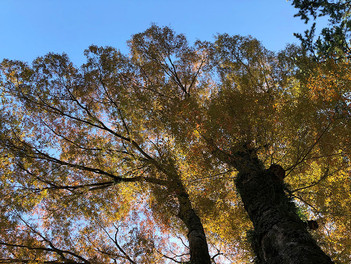熱海梅園の大きな木