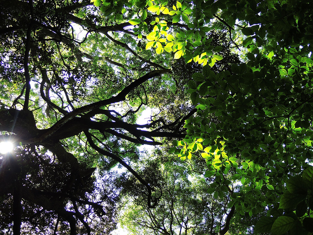 真鶴半島自然公園の森 真鶴別荘不動産Irodoriいろどり