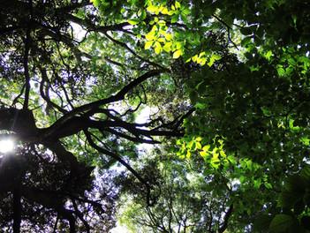 真鶴半島の森で涼しく
