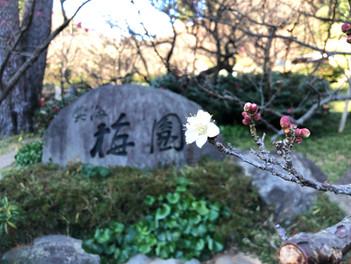日本一早咲きの梅が咲いています